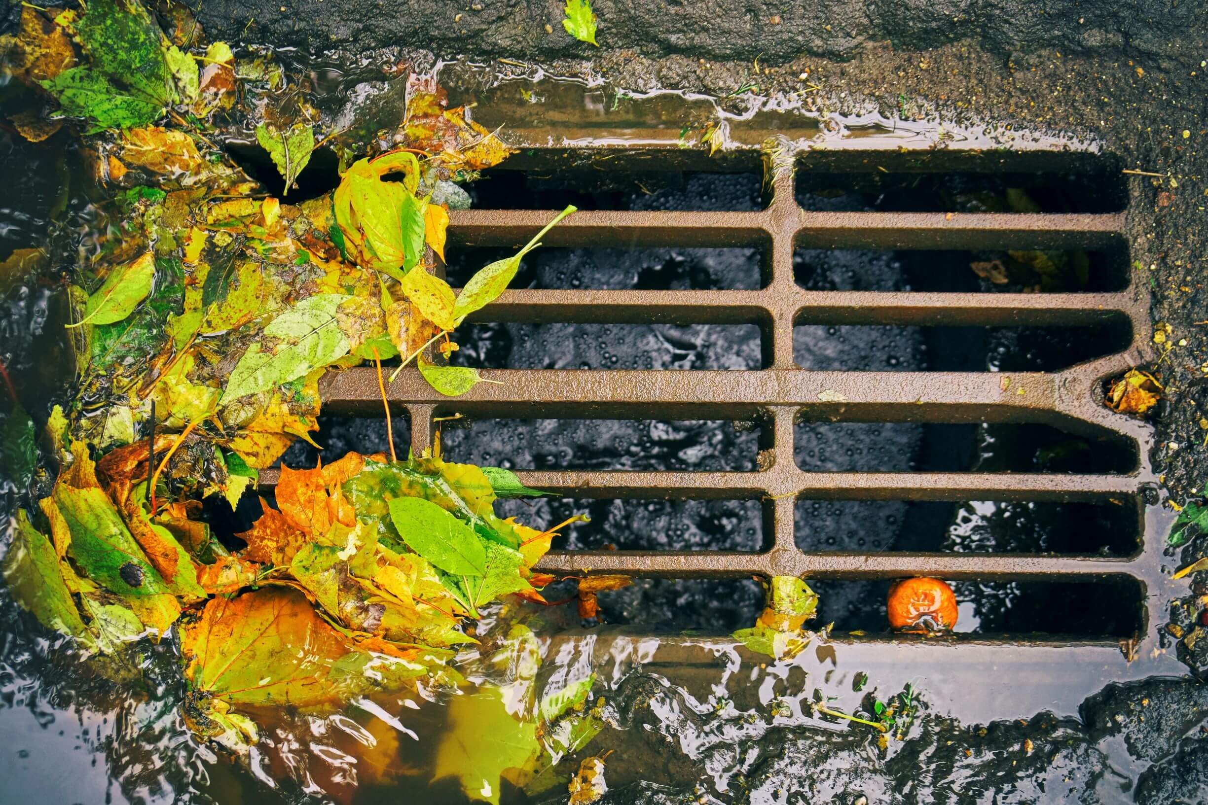 Stormwater drain with autumn leaves on grate